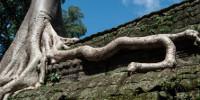 Kambodża - Magia Angkoru